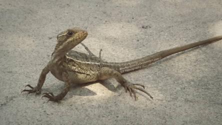 Lizard by blueraccoon23