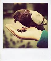 Polaroid: Feeding. by inbrainstorm