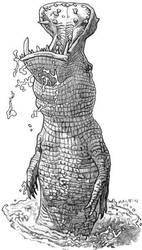 Crocopotamus by torenatkinson