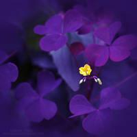 Yellow flower by LisenaPirus