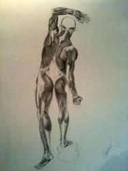 Muscle Anatomy by Cristianocubano