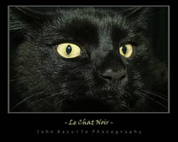 Le Chat Noir by barefootphotography
