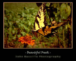 Beautiful Freak by barefootphotography