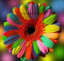 Colourful by SenselessDot