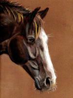 Horse portrait III by Justysiak