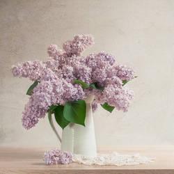 Lilac I by Justysiak