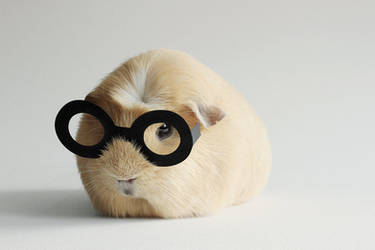 Booboo Potter by meganjoy