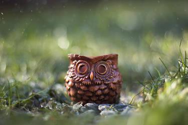 Magic owl by meganjoy