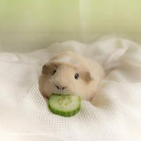 Boocumber by meganjoy