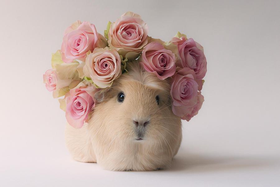 Flower girl by meganjoy