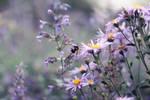Honey bee by meganjoy