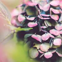Bloom by meganjoy