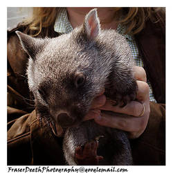 You want a Wombat by StrawBeth