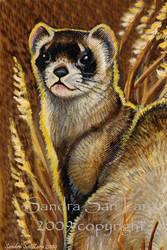 Black footed Ferret Card by ssantara