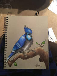BlueJay by Enerdyte