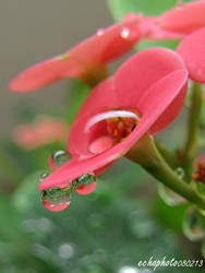 Flower with droplets by leeecho