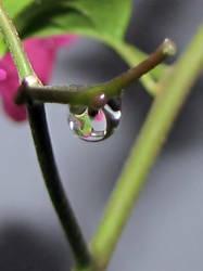Clear Drop by leeecho