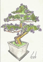 Bonsai by leocadio