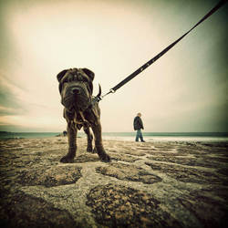 A dog on the beach by julie-rc