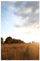 Wheatfield 04 by aaron-thompson