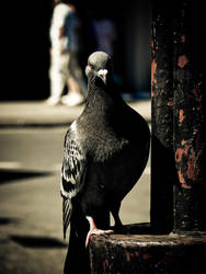 Urban Hunter by Virfir