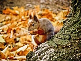 Squirrel by Virfir