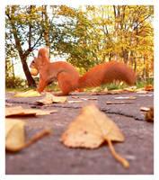 Squirrel II by Virfir