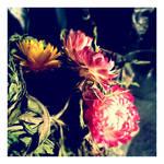 hidden beauty by AMPhitheatre