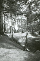 trees in the light by AMPhitheatre