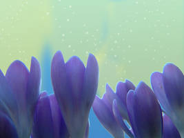 Spring stars by AMPhitheatre
