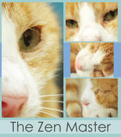 The Zen Master by AMPhitheatre