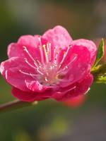 Peach parfait by AMPhitheatre