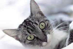 Emerald eyes by ashevaan