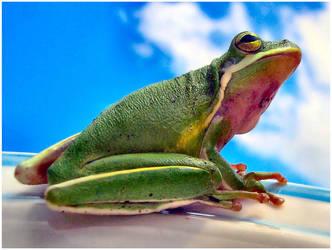 Kermit .2. by did