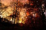 Autumn 36 by Lexia84