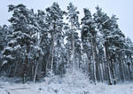 Winter 01 by Lexia84