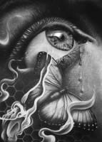 Chryseyelis + Time Lapse by gavinodonnell