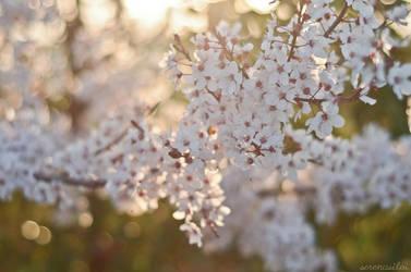 welcome spring part II. by SerenaSilvi