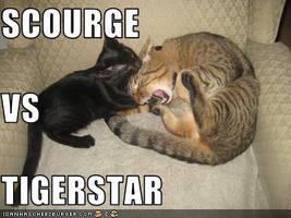 Tigerstar Vs Scourge by Werevampiwolf