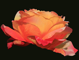 rose by riku-dovienya