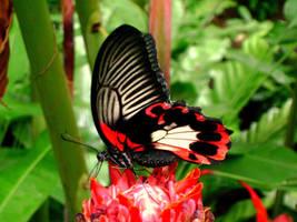 Butterfly by BriskytheSovietSpy