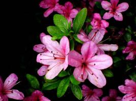 Pretty in Pink by BriskytheSovietSpy