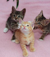 Kittens in play by meow15