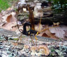 Bug...thing by Melyssah6