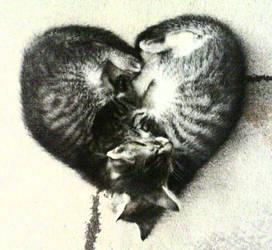 Sleeping kittens by Ayrveda