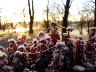 Frozen imagination by AlexanderSkoog