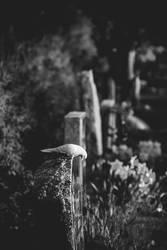 Photography Course #3 by AlexanderSkoog
