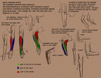 Intro to the forearm by FUNKYMONKEY1945