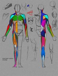 Anatomy Crash Course by FUNKYMONKEY1945