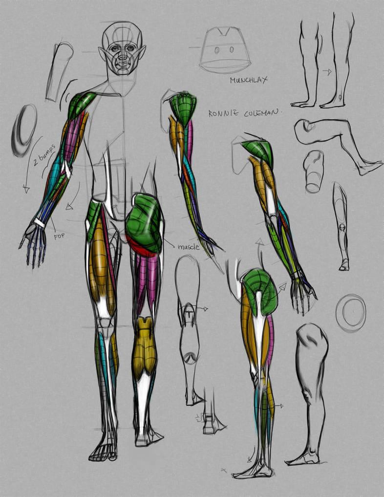 Anatomy Demo From Online Class By Funkymonkey1945 On Deviantart